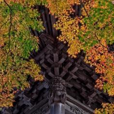 Entre les feuilles au temple Shuzenji dans la péninsule d'Izu