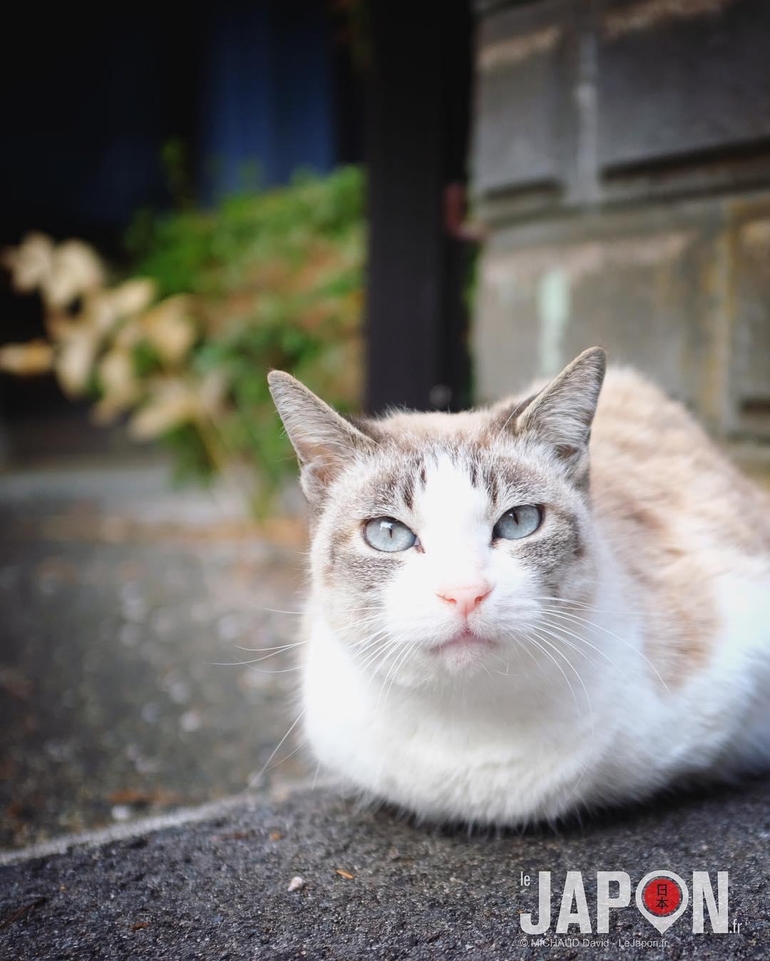 Bientôt les derniers habitants de Sagiura… 😸😸😸 #IzumoAdventures