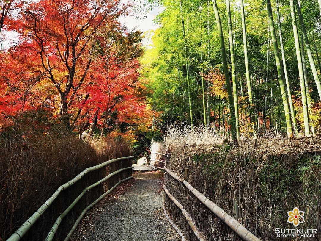 Momiji VS Take #japon #kyoto