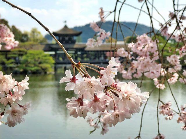Retour au Heian-jingu après de nombreuses années