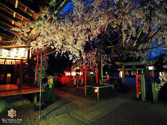Certains endroits ne paient pas de mine en temps normal, et puis quand vient le printemps… #japon #kyoto