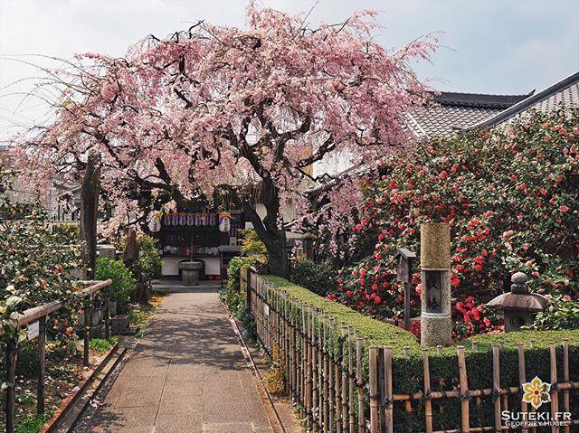 Métamorphosé #japon #kyoto