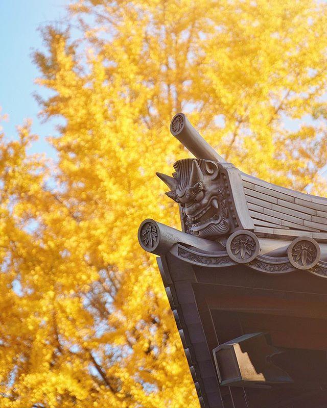 Les ogres protecteurs du Shofukuji de Fukuoka sous la lumière d'automne, définitivement ma saison préférée au Japon.