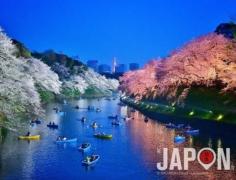 La pluie d'aujourd'hui a marquée un peu la fin de la saison des Sakura à Tokyo… 😢🌸🌸🍂 Heureusement j'ai pu hier soir faire une dernière série de photos en attendant l'année prochaine ! 😀🌸🌸🌸 Vous avez pu en profiter ? #Sakura #TokyoSafari #SakuraReport