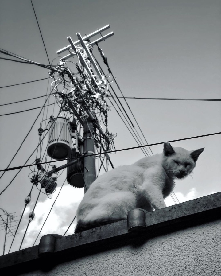 Un chat branché (pour la collection de @kansai_cats ?)