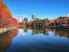 Les belles couleurs d'automne dans le parc du château d'Osaka