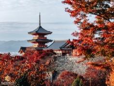 Encore un petit tour au Kiyomizu-dera… Comment pourrait-on se lasser d'un tel paysage ? 😌  Un site clairement pas avare en bons spots photos ! . . . . . #hellofrom Kyoto 京都 🇯🇵