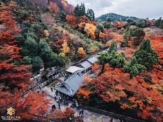 Kiyomizu-dera ne manque pas de points de vue pour profiter des érables !