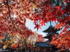 Encore une photo de pagode, vous ne m'en voulez pas ?! 😅  J'en ai vraiment beaucoup alors je vous les distille petit à petit, une publication sur trois, peut-être aviez-vous remarqué ? 😜  Enfin moi je trouve que tout est toujours mieux avec une pagode dans le décor ! 😁 . . #hellofrom 京都 🇯🇵 #redleaves #beautifulkyoto #fujifilm_xseries #kyototravel #pagoda #colorsofautumn #japan_photo #kyototrip #京都好き
