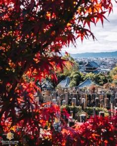 Tout le monde a le droit de profiter des Momiji !  Je trouve très apaisant de se promener dans un cimetière, et vous ?  Le calme absolu, et dans le cas présent une petite vue pas piquée des hannetons (😅), et bien sûr encore et toujours les couleurs automnales au programme ! 😌  Hop, on mixe tout ça pour faire cette photo et voilà ! 😁 . . #hellofrom Kyoto 京都 🇯🇵 #kyotogram #fujifilmphotography #japanesetemple #redleaves #peacefulplace #kyotophoto #japan_focus #京都好き #そうだ京都行こう
