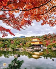 Kinkakuji de Kyoto dévoré par les flammes… de l'automne !