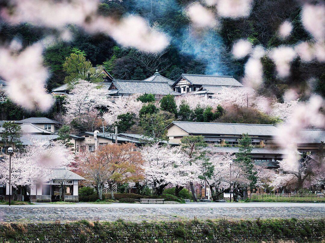 On démarre enfin cette série de cerisiers dans l'un des plus chouettes coins de Kyoto, l'incontournable Arashiyama !  Je ne compte pas nombre de fois où j'y suis allé ! J'y vais toujours au moins une fois durant les sakura je crois !  La météo n'était pas au rendez-vous mais je suis plutôt content que ce cliché !  Connaissez-vous d'Arashiyama ? Qu'en pensez-vous ?! 😁  #hellofrom Kyoto 京都 🇯🇵 #sakurafever #cherryblossoms #beautifulkyoto #springflowers #japanvibes #fujifilmfrance #TheWeekOnInstagram #lr_moments #hboutthere