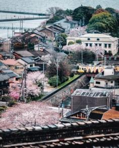 On se fait une petite série dans la série (des sakura) avec quelques trains dans le décor ! 🚃🚃🚃 Celui là était entièrement décoré aux couleurs d'un drama tv, avec donc tout un tas de personnages sur les côtés. Notamment quelques samouraïs !  Les japonais sont fans de train donc ça colle très bien ici 😁 On est dans le thème !  Je ne me serai probablement pas intéressé aux trains ailleurs qu'au Japon, ça contamine un peu tout le monde ici je crois haha ! 😅  Vous vous êtes déjà surpris à prendre des photos de train au Japon ?! 😁  #trains_worldwide #urbanview #japantown #gobiwako