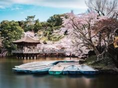 Proche des deux principaux sites de Nara, le Todai-ji et le Kasuga Taisha, on trouve aussi en cherchant bien le très joli Ukimido ! 😍  Une sorte de petit pavillon posé sur un étang, et vous l'aurez compris, bien entouré de nombreux cerisiers ! 🤩  Tôt le matin, les bateaux ne sont pas encore de sortie, et c'est donc un moment très calme dont j'ai pu allègrement profiter ! 😬  Pour la première photo, j'ai opté pour une pose longue (avec trépied et filtre ND) pour obtenir cet effet lissé et soyeux de l'eau 😌  J'attends vos remarques la dessus 😁 Je lis tous vos messages bien entendu, donc n'hésitez pas ! 😎  #sakuratree #cherryblossomtrees #japanesecherryblossom #lesfrancaisvoyagent #voyageursdumonde #springphotography #longexposureshot #cerisierenfleurs #fromjapan #quietplace