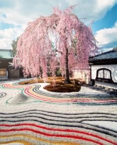 Si vous trouvez que les jardins secs japonais manquent de vie, alors celui du temple Kodai-ji à Kyoto vous aurait peut-être fait changé d'avis ! 😁  Au printemps, avec son splendide cerisier pleureur, il est déjà à son top niveau, mais quand en plus ils décident de donner un grain de folie au reste ! Ça devient ultra coloré ! Du quasi jamais vu ! (C'est la deuxième fois pour eux) 😄  J'apprécie vraiment beaucoup ce temple et je vous le recommande fortement (vous pouvez enregistrer la publication pour garder l'idée dans un coin), parce que c'est un très beau site bien sûr. 😌  Mais aussi car c'est l'un des très rares endroits du genre à savoir se renouveler régulièrement, et même à prendre des risques ! On ne fait quasiment jamais deux fois la même visite. 😲  Le jardin sec change de design, les projections lumineuses le soir sont toujours différentes, la végétation change au fur et à mesure des saisons, et le chemin a même droit à ses petites variations… 😬  En bonus une très jolie bambouseraie, tranquille et peu fréquentée ! 😎  Bref, dites moi si cet aspect coloré du jardin vous plaît bien, ou si au contraire c'est too much et ça ne colle pas avec l'image/l'esprit de jardins du genre ! . . . #createexplore #hbouthere #artofvisuals #beautifuldestinations #visualambassadors #speechlessplaces #stayandwander