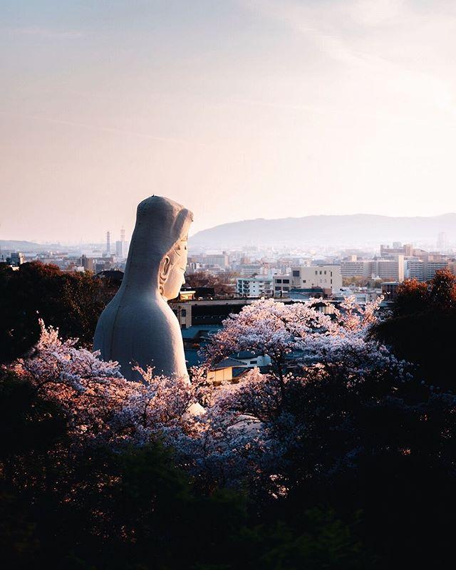 Kannon veille sur Kyoto 😌 . . . #createexplore #hbouthere #artofvisuals #beautifuldestinations #visualambassadors #speechlessplaces #stayandwander #voyageaujapon #sakuratree #beautifulspring #cerisierenfleurs #fujishooters #frenchtravelers #photojapan #visitjapanjp #passionpassport #fujifilmgfx50s #fromjapan #theweekoninstagram #sopeaceful #magicalplace #quietplace #scenery_lovers #japanesecherryblossom